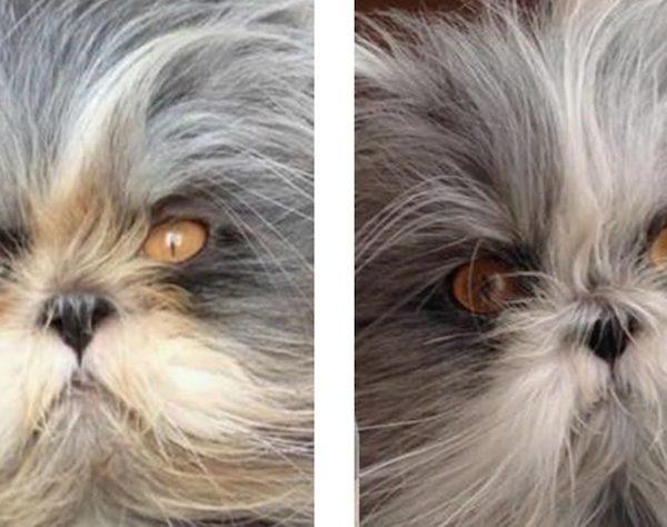 smacchiatori eye envy gatto