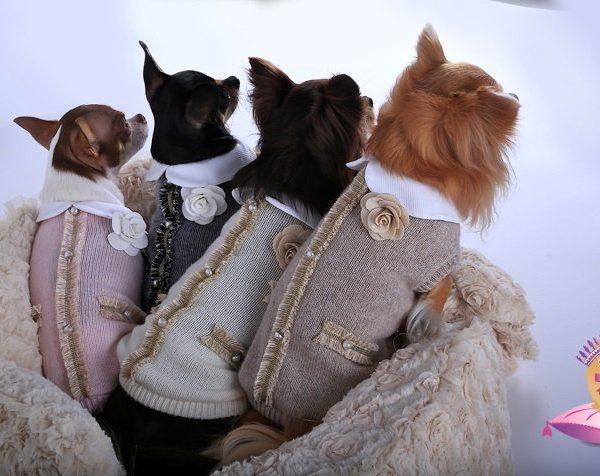Maglioncino per cani in lana e cachemire Babydog Boutique baby madame