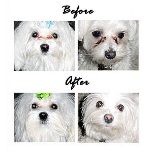 EYE ENVY POWDER-polvere smacchiante occhi per cani e gatti