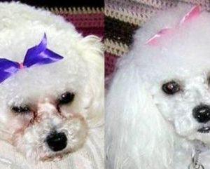 EYE ENVY DOG SOLUTION-soluzione smacchiante occhi cane