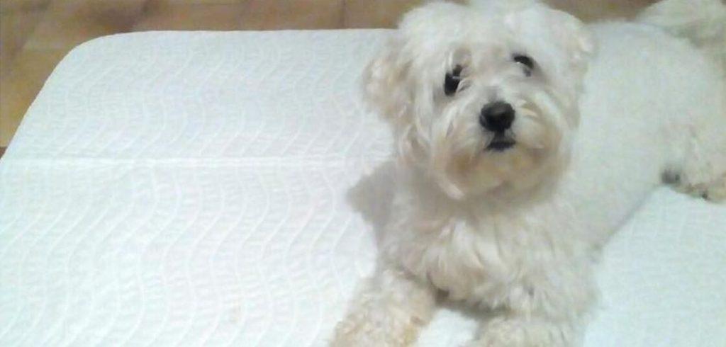 tappetini per cani lavabili