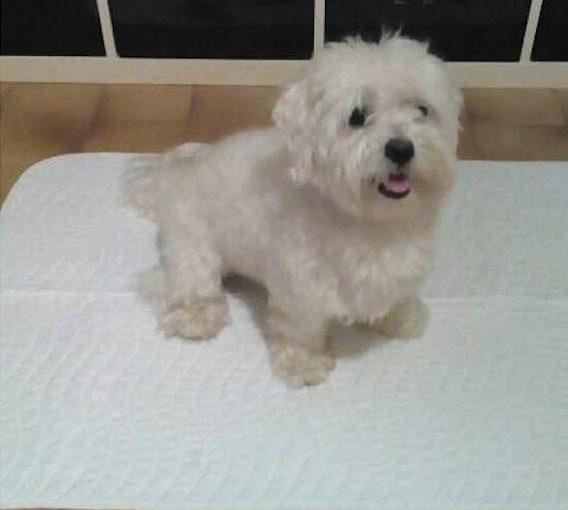 tappetini per cani lavabili giopad