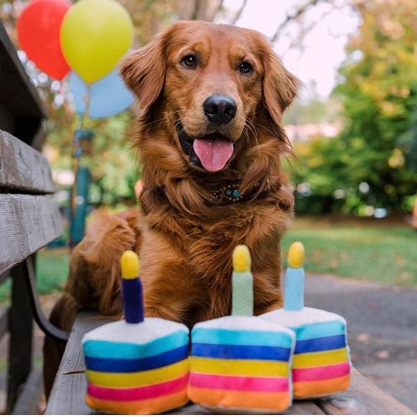 gioco per cane peluche squeaker torta compleanno play