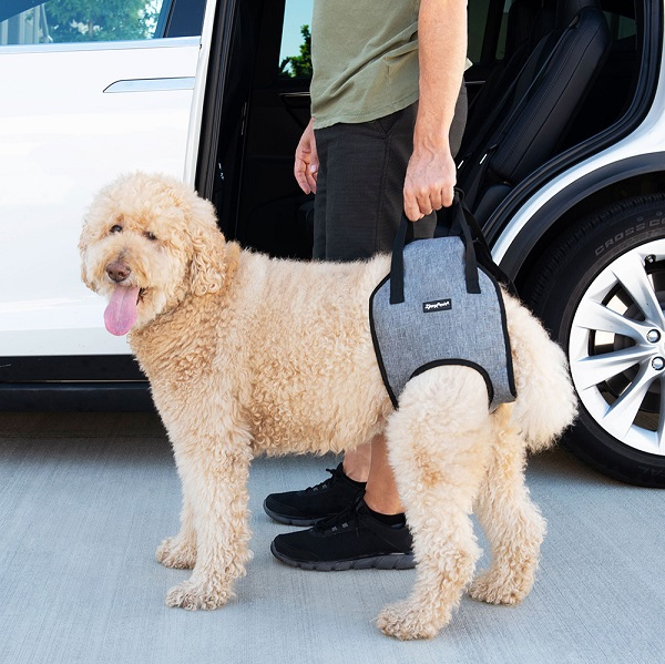 imbracatura per cani anziani adventure support zippy paws