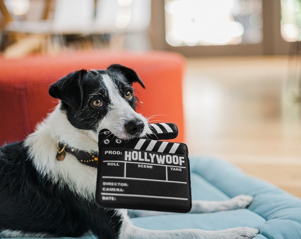gioco per cani ciak play collezione hollywood cinema giocattolo in peluche